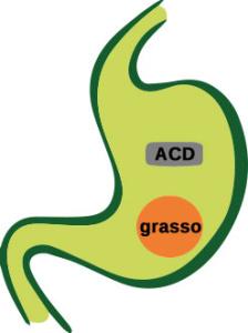 stomaco - fase 1